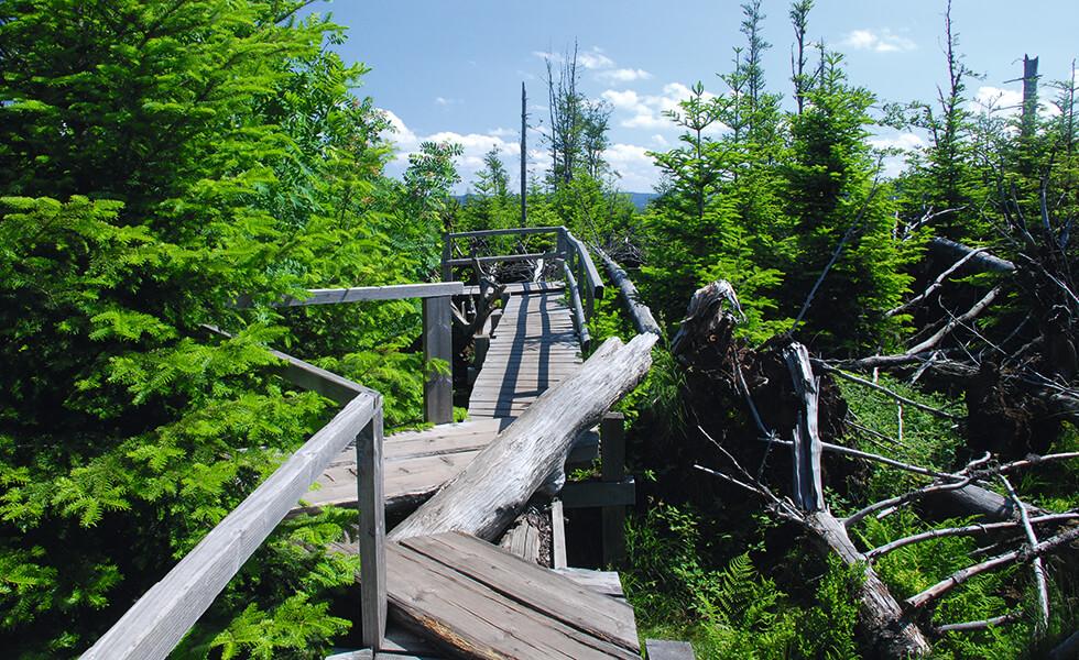 Holzsteg im Schwarzwald