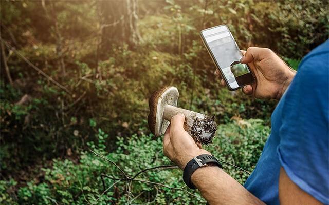 Mann nutzt eine App zur Pilzbestimmung